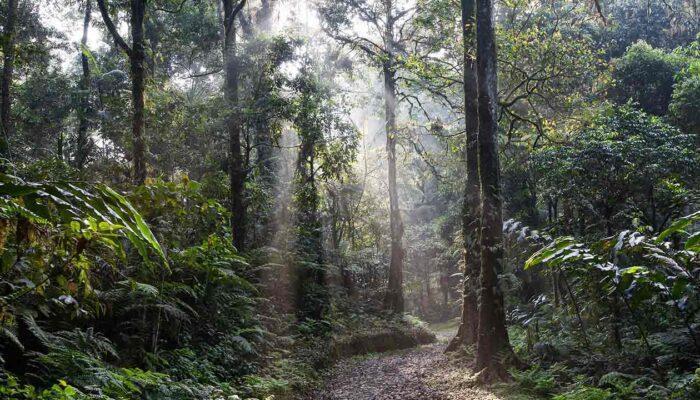 Pildil on vihmamets, mis illustreerib teemat Brasiilia vihmametsad saavad plokiahelalt abi